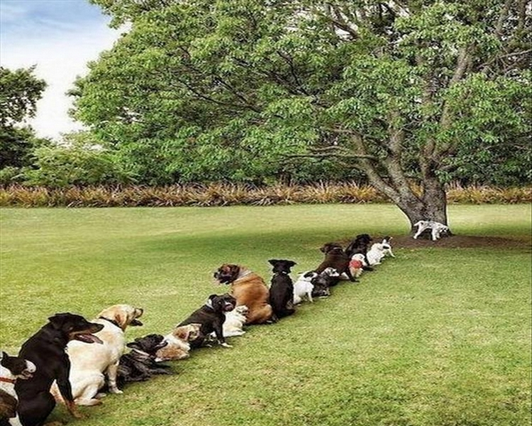Funny-Animals-dog-queue